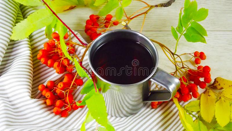 Twigs berries of mountain ash. Brewed tea from berries in a mug royalty free stock images