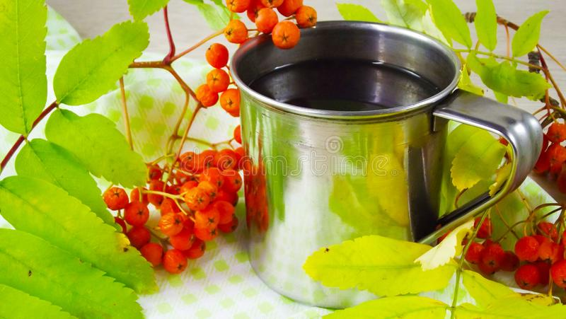 Twigs berries of mountain ash. Brewed tea from berries in a mug royalty free stock photography