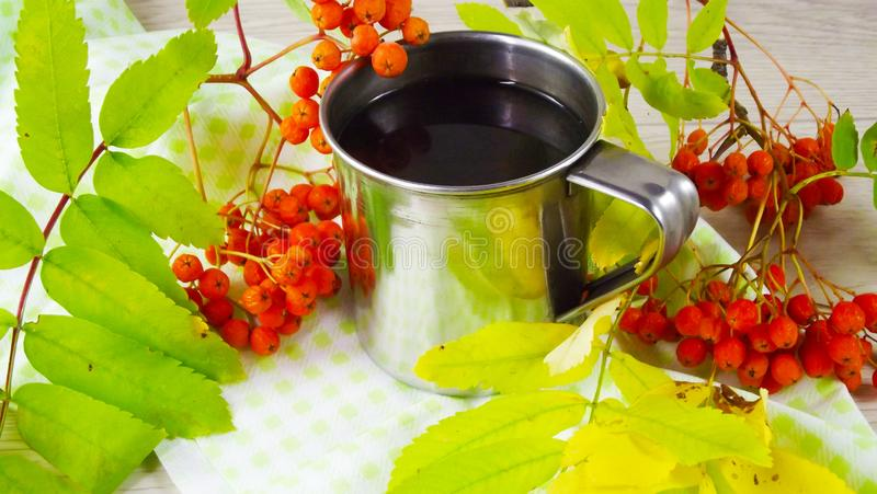 Twigs berries of mountain ash. Brewed tea from berries in a mug stock photography