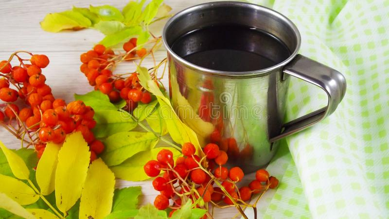 Twigs berries of mountain ash. Brewed tea from berries in a mug stock images