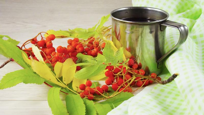 Twigs berries of mountain ash. Brewed tea from berries in a mug stock photo