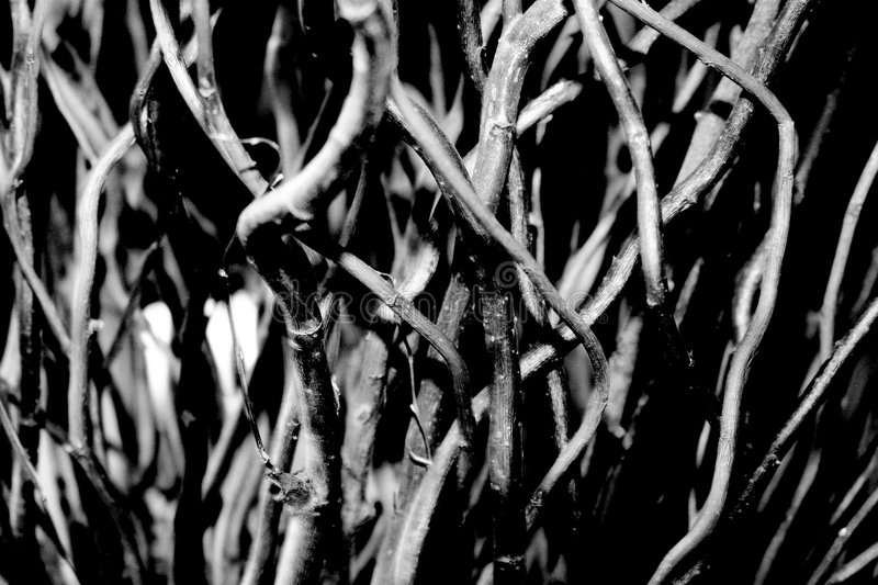 Twigs in black and white stock photo