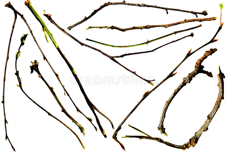 Twigs and Branches. Isolated of eleven different small twigs and branches with individual isolation paths royalty free stock photos