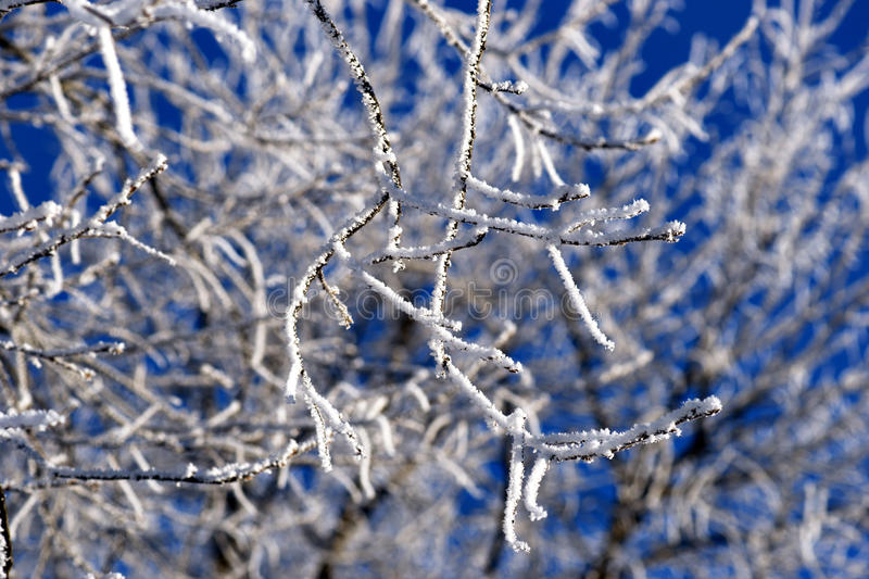 Download Twigs covered in snow stock photo. Image of winter, snow - 28891736