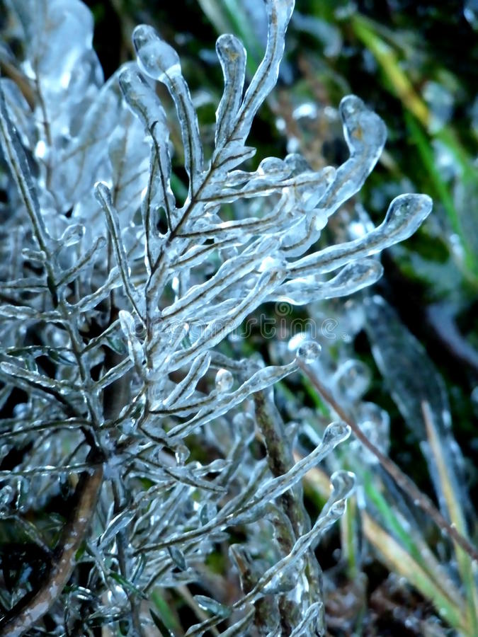 Twigs Encased in Ice royalty free stock photos