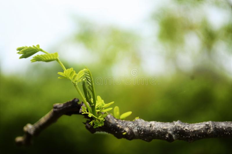 Twigs and foliage royalty free stock photography