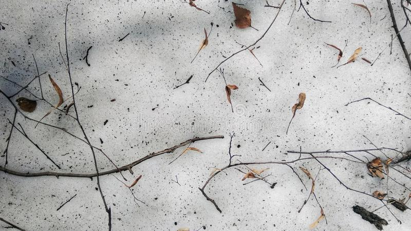 Twigs on the forest floor. The snow is melting.The snow is melting. Spring is coming royalty free stock photography