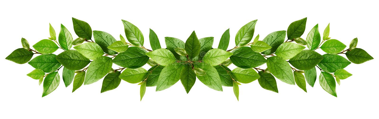 Twigs with fresh green leaves in a garland stock photo