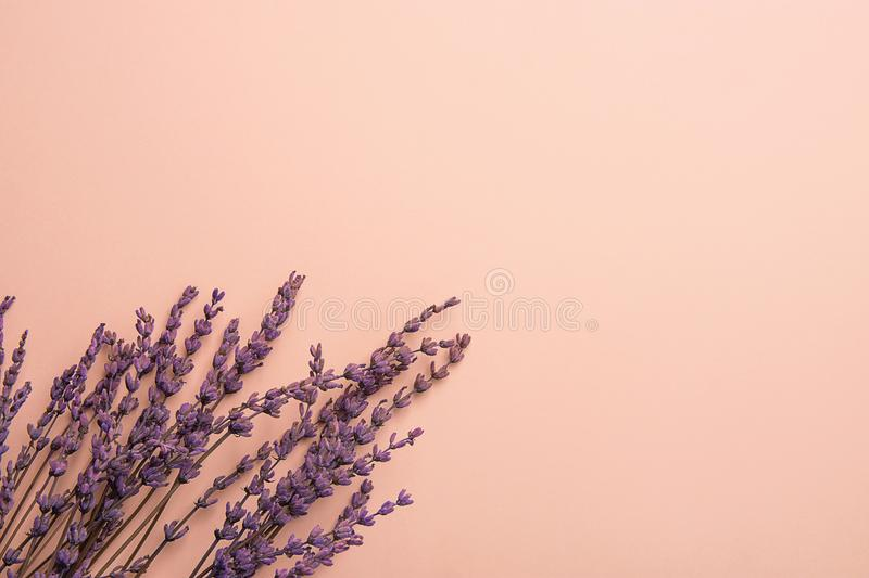 Twigs of Lavender Flowers Arranged in Lower Border on Solid Pink Background. Easter Mother`s Day Wedding Wellness Cosmetics. Concept. Minimalist Style. Website stock image