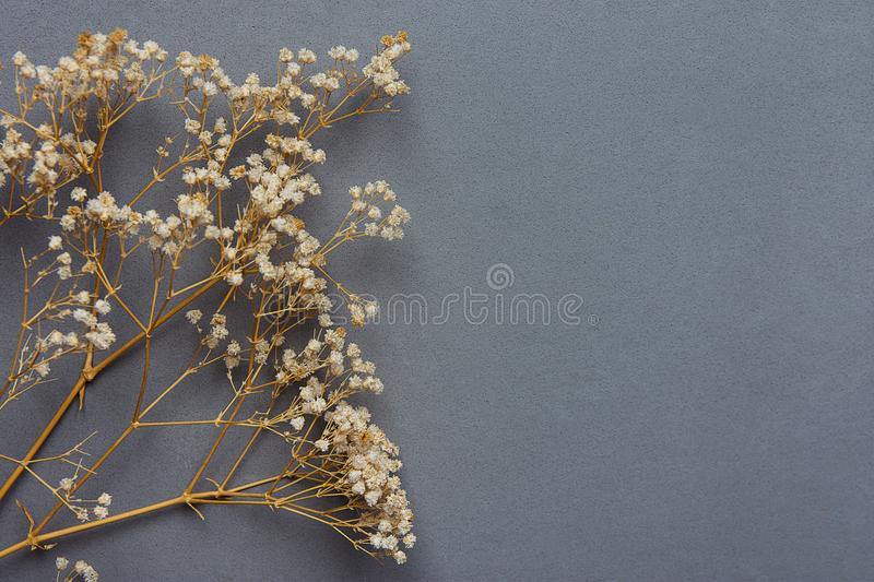 Twigs of Small White Dry Spring Flowers on Black Background in Vintage Style. Easter Mother`s Day royalty free stock photography