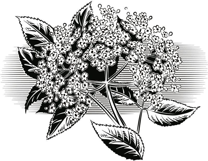 Twijg van oudere bloemen royalty-vrije illustratie