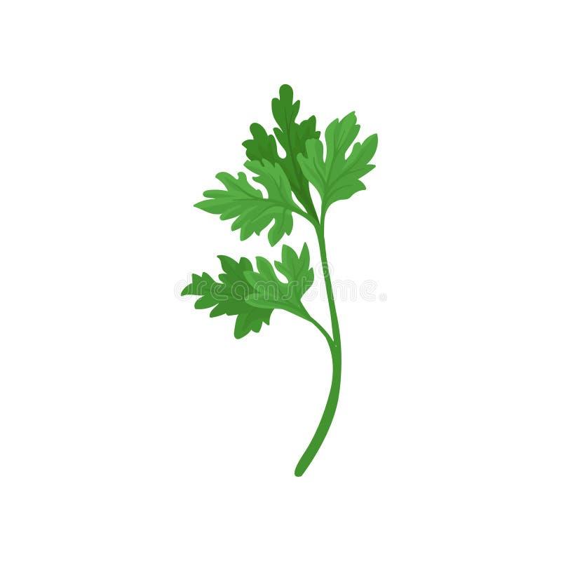 Twijg van peterselie met heldergroene aromatische bladeren Natuurlijk ingrediënt voor smaakstofschotels Vlak vectorpictogram stock illustratie