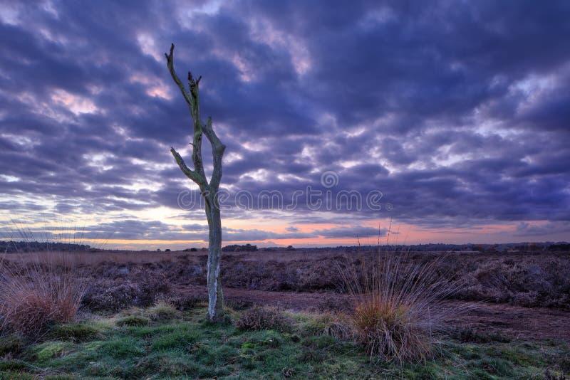 Twilight сцена на спокойной вереск-земле, Goirle, Нидерланды стоковые изображения rf