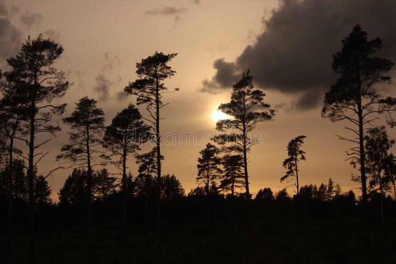 Twilight темнота вечера стоковое фото