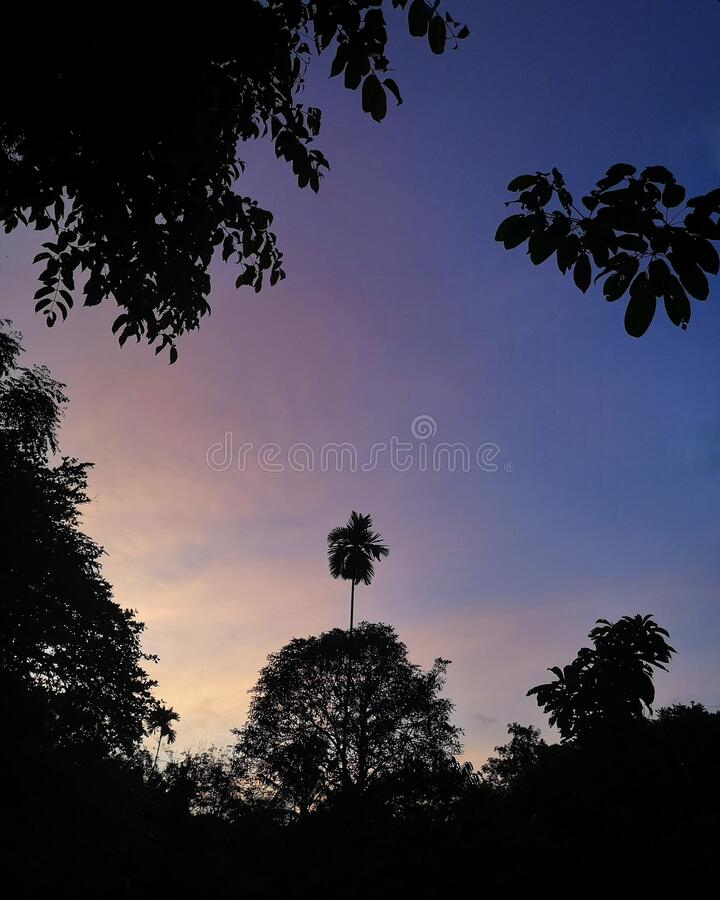 Twilight dusk evening mood in tropical forest stock images