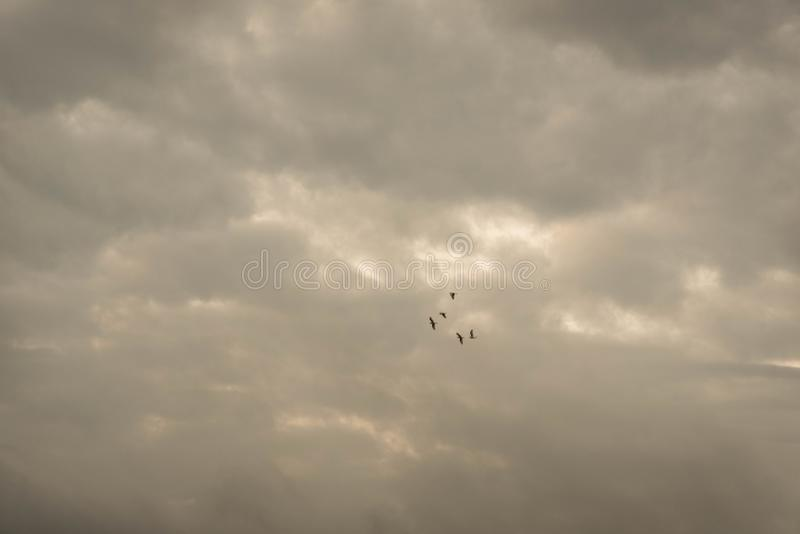 The Twilight flight.jpg royalty free stock photo