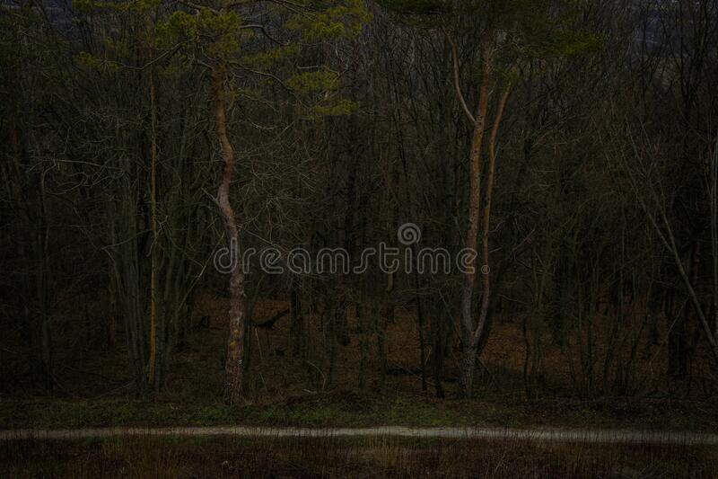 Twilight forest horror atmospheric landscape phantom style dark brown and green colors scenic view Halloween mood autumn season. Time royalty free stock photos