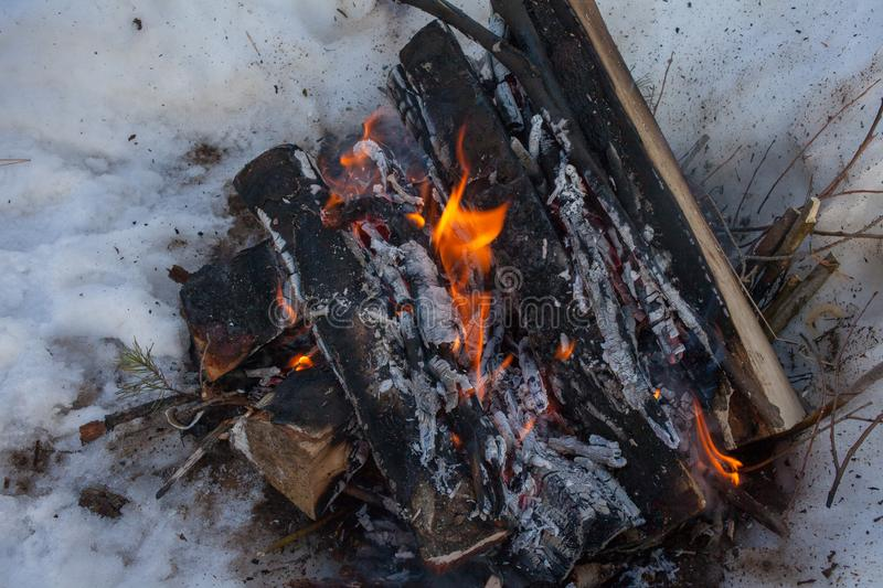 fire in the winter forest in the snow of birch wood royalty free stock image