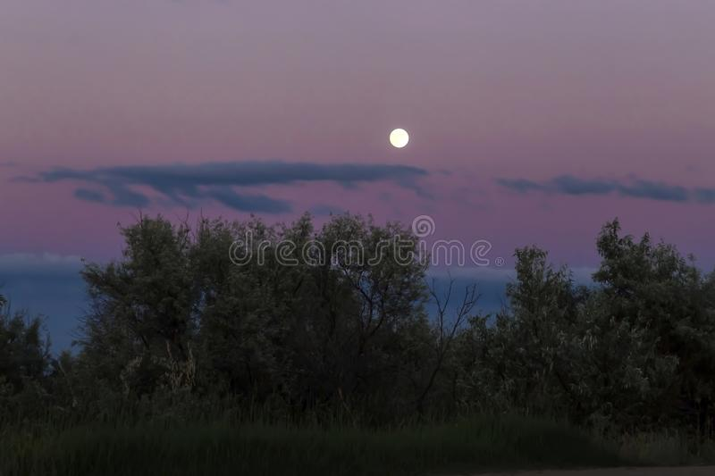 Twilight gloomy landscape. Beautiful purple purple evening sky at sunset and the moon against the background of the forest in the stock images