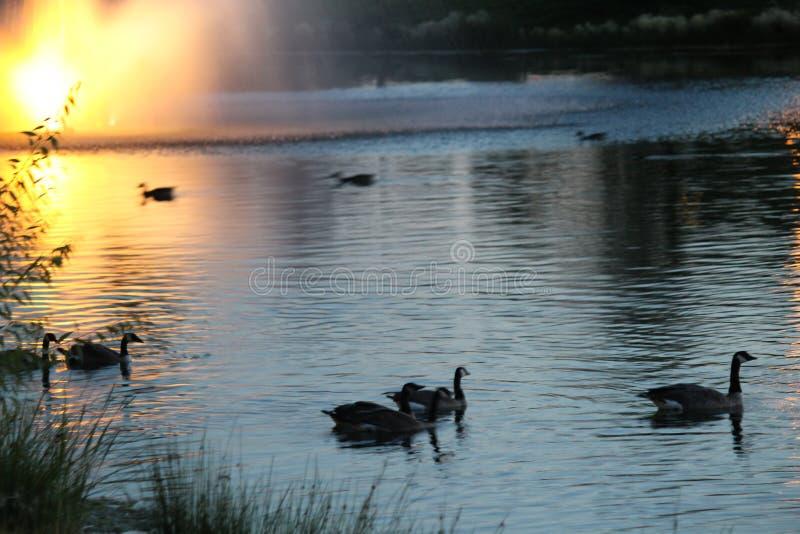 Twilight at Julius M Kleiner Memorial Park royalty free stock images