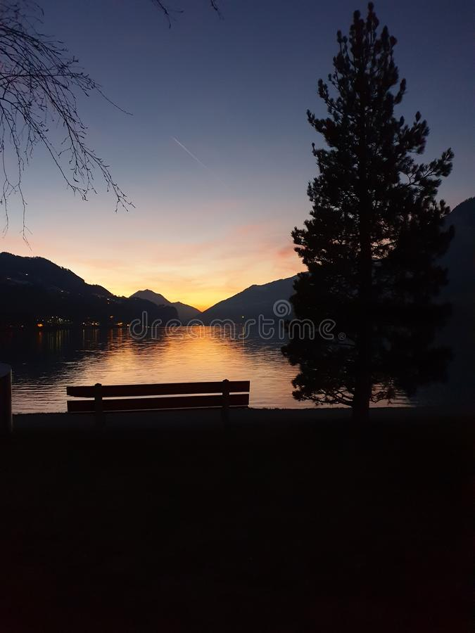 Twilight: magnificent mountain scenery by the lake in the evening light at the golden hour. Background, space for text. A large conifer tree, a bench and royalty free stock images