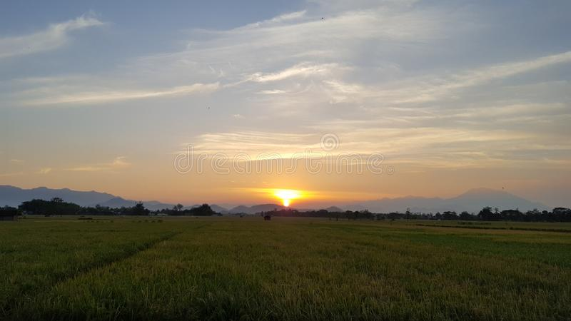 Twilight scenery in the rice fields. Giving the impression of calm, it`s time to welcome the night stock photo
