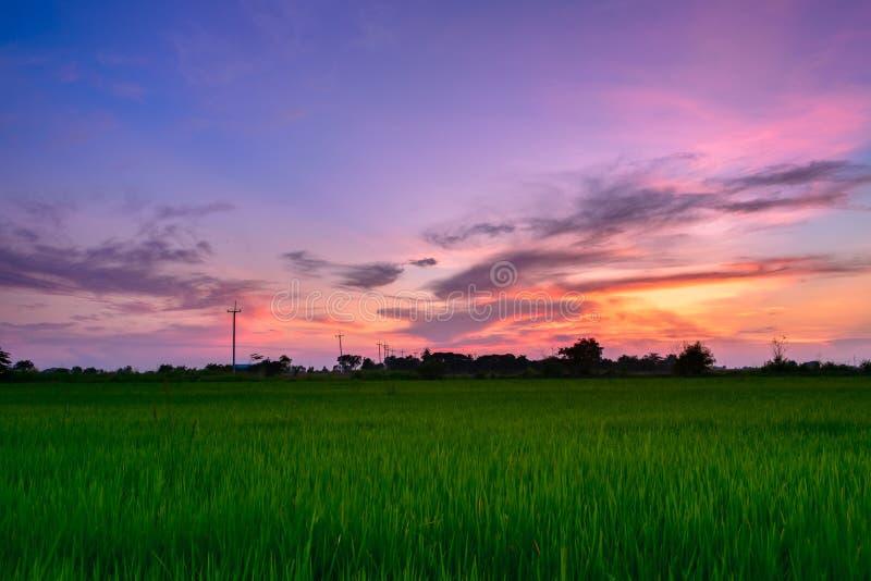 Twilight sky with paddy field royalty free stock photo