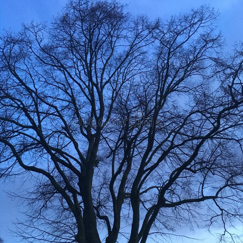 Tree silhouette at night on blue background stock images