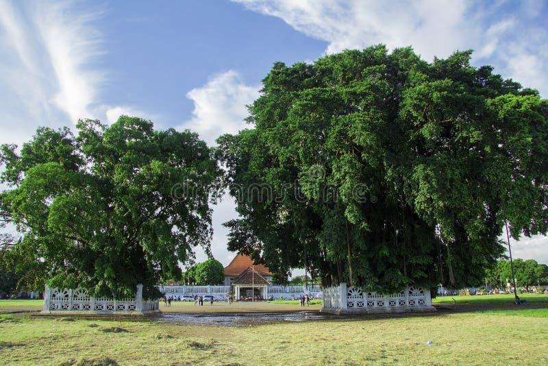Twin banyan trees in the south square, alun-alun selatan yogyakarta. Yogyakarta, Indonesia - april 2, 2019 stock images