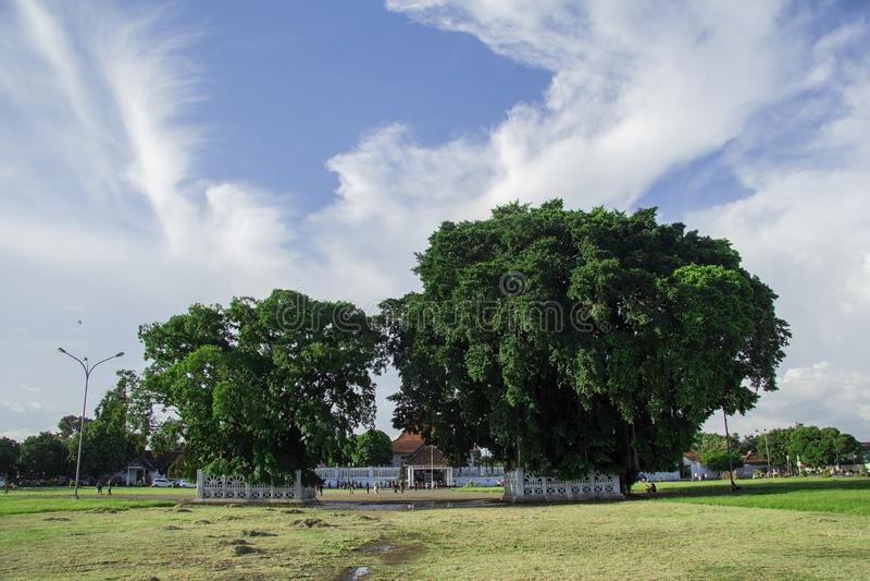 Twin banyan trees in the south square, alun-alun selatan yogyakarta. Yogyakarta, Indonesia - april 2, 2019 royalty free stock photos
