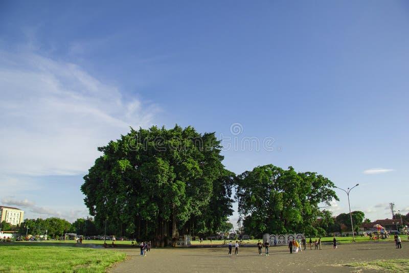 Twin banyan trees in the south square, alun-alun selatan yogyakarta. Yogyakarta, Indonesia - april 2, 2019 royalty free stock photo