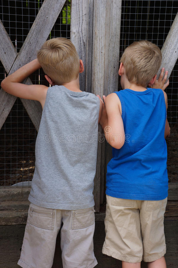 Boys at Barnyard Fence. Two young twin boys peer into an animal pen through the closed gate hoping to catch a glimpse of the animals inside royalty free stock images