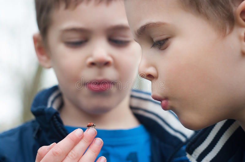 Twin brothers study the ladybug royalty free stock photography