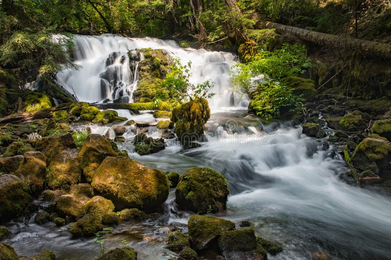 Pearsony Falls royalty free stock images