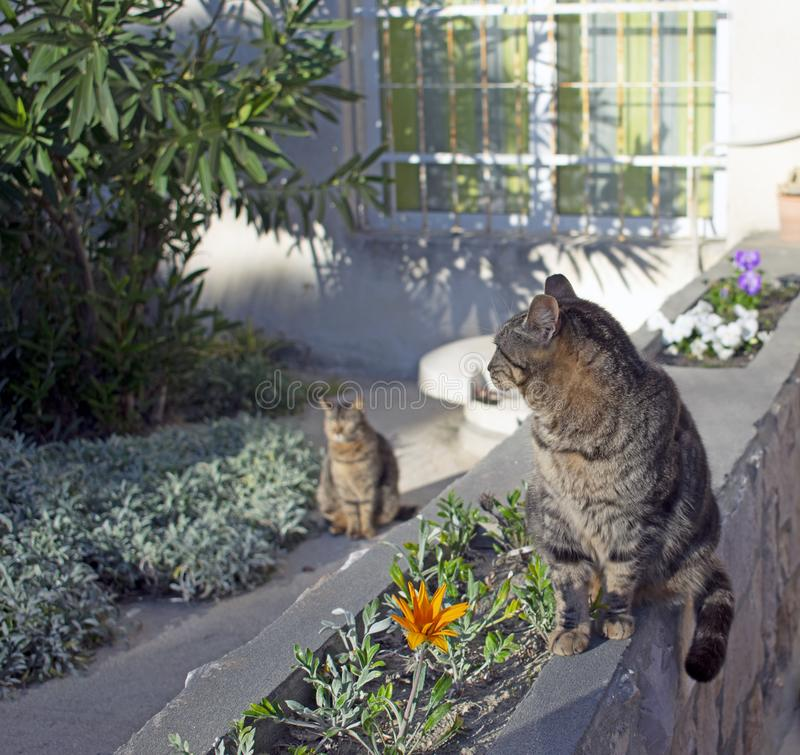 Twin cats in sunlight stock photos