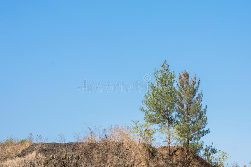 Twin green trees on a barren hill. And empty blue sky on the background royalty free stock photo
