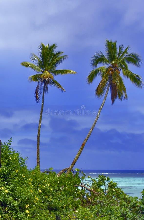 Twin Palms royalty free stock photos