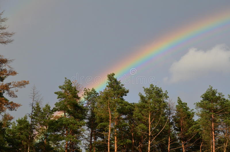 Twin rainbows. Two rainbows over the forest at rainy day royalty free stock image