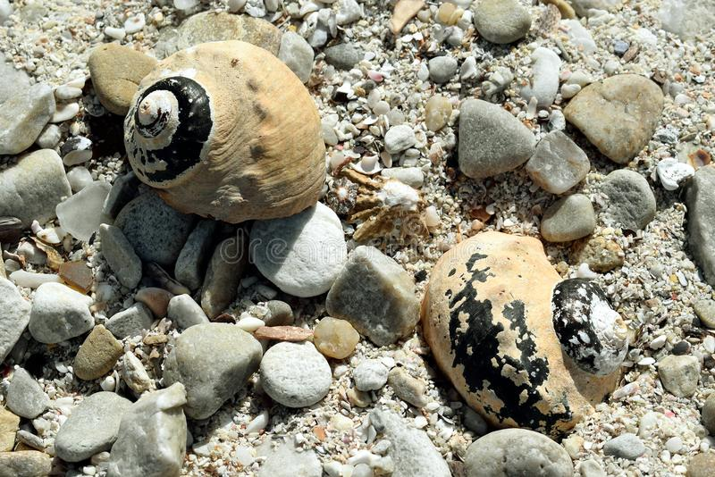 Twin shells stock photography