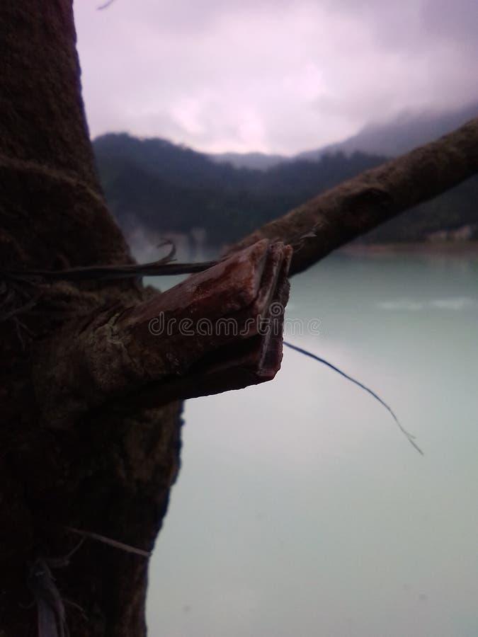 Twings που σπάζουν στο ξύλο στοκ φωτογραφία με δικαίωμα ελεύθερης χρήσης