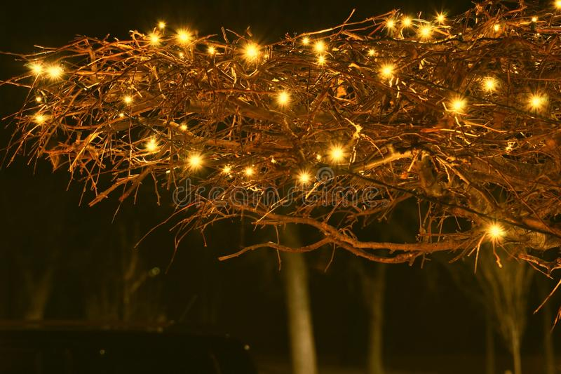 Twinkle. Christmas lights twinkle in the cold cold night stock image