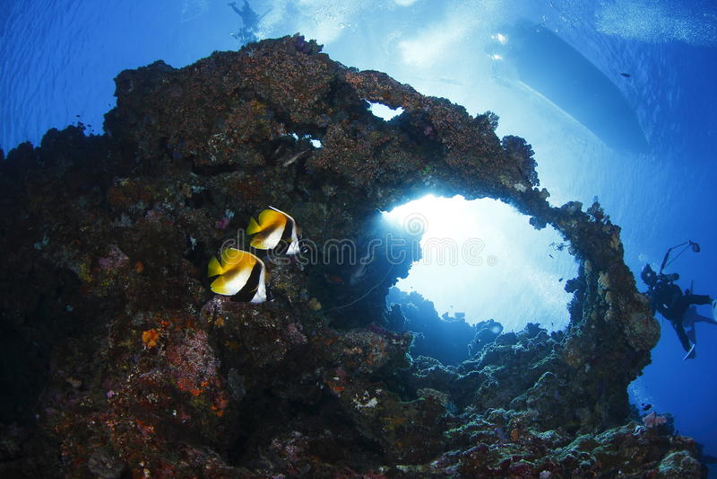Download Twins Butterflyfish stock image. Image of ocean, fisheye - 29372773