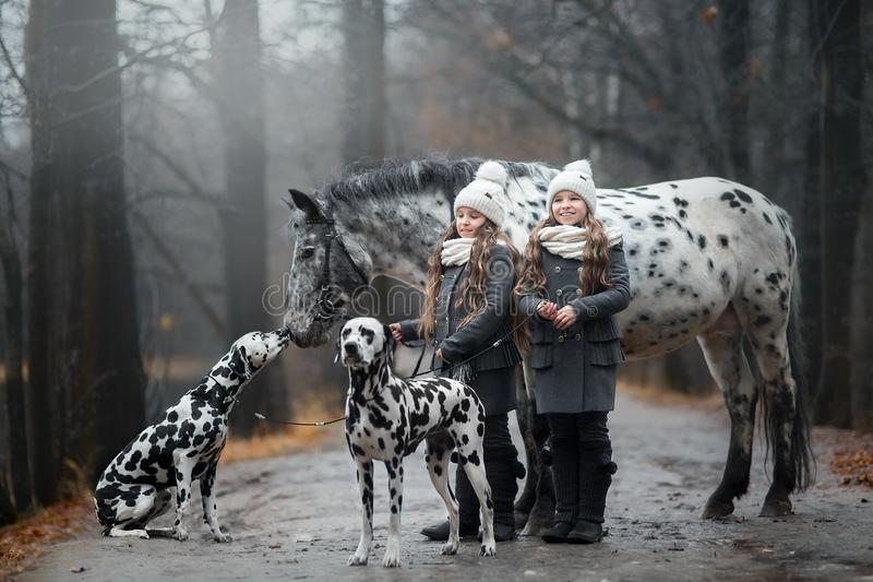 Twins girls portrait with Appaloosa horse and Dalmatian dogs royalty free stock photo