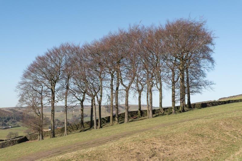 Twintig Bomen bij Hayfield in het Piekdistricts Nationale Park stock afbeeldingen