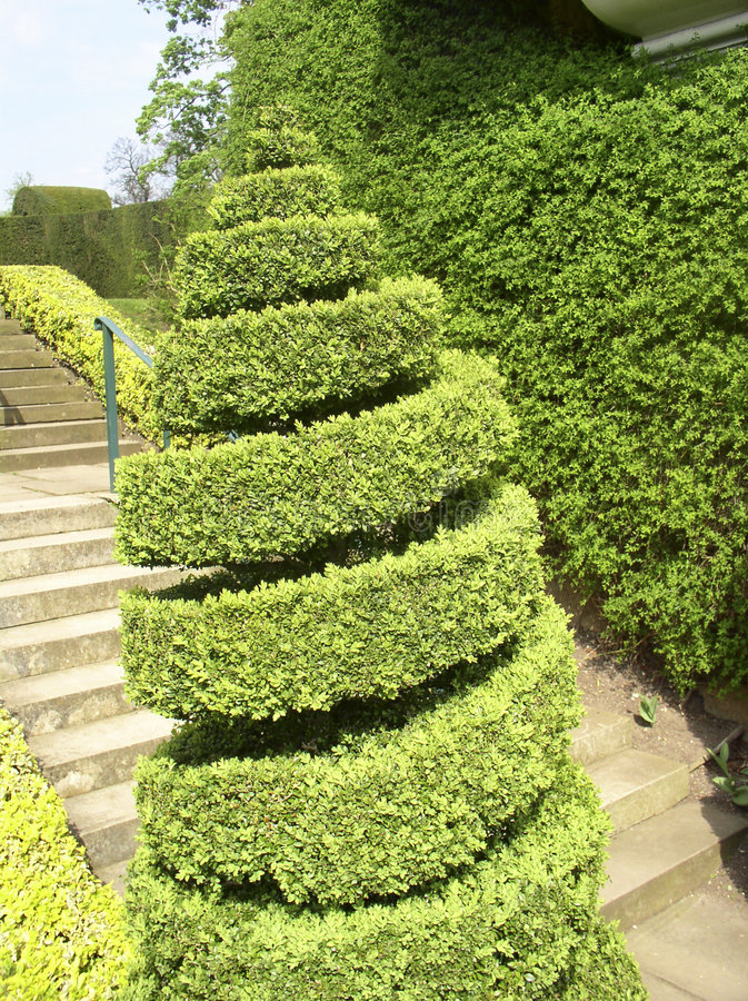 Download Twirl topiary stock photo. Image of steps, leaves, tree - 116908