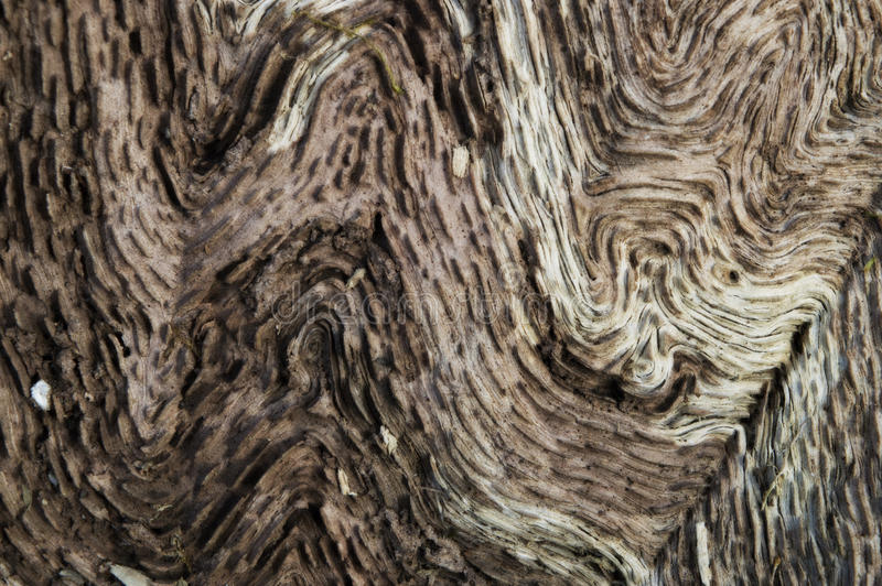 Twisted pattern on an old oak royalty free stock photo