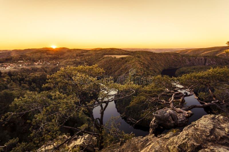 Twisted sörjer på en vagga högt ovanför kanjonen av floden i sol royaltyfri foto