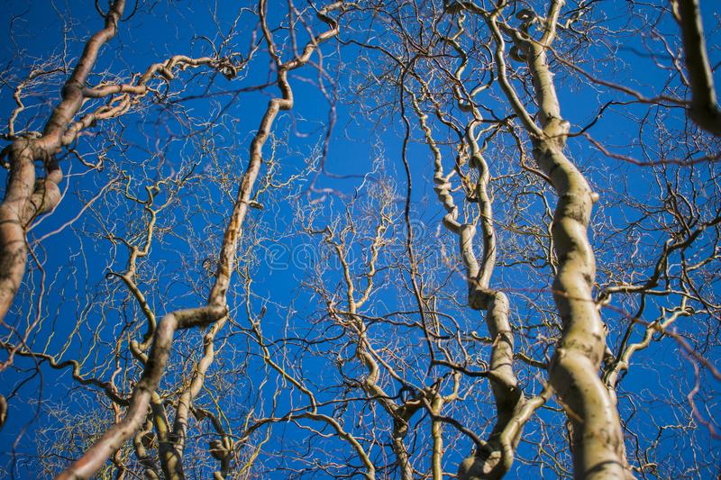 Twisted tree branches against the sky stock photos