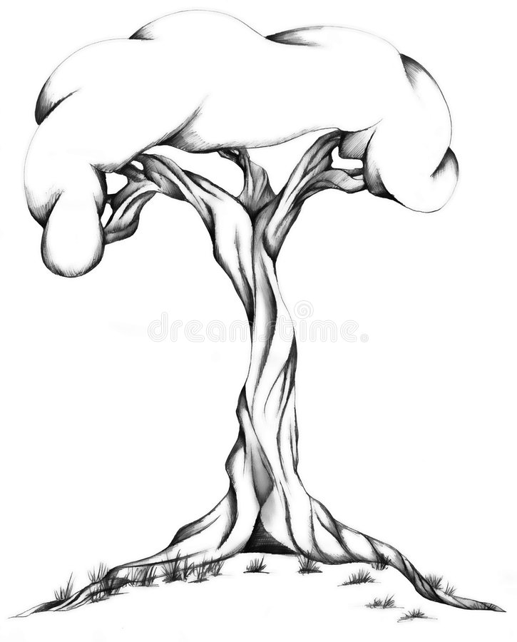 Free Twisted Tree Illustration Stock Image - 9230881
