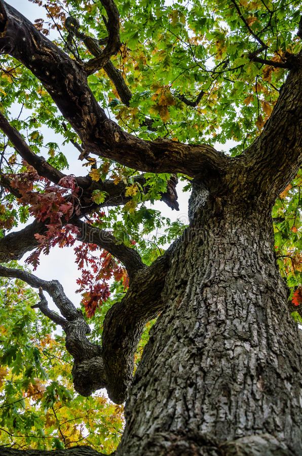 Download Twisted Trunk stock image. Image of outdoor, tree, bark - 27044011